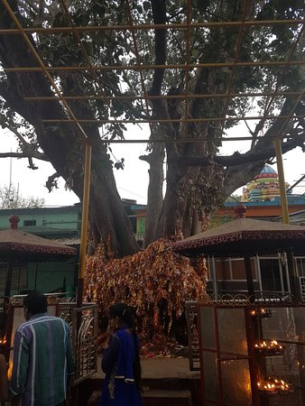 Majhighariani Temple: holy tree outside temple