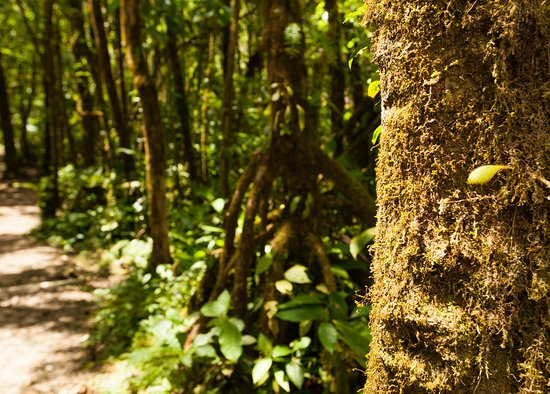 Tenorio Volcano National Park, Costa Rica: Vegetation along the trail