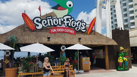 Half Senor Frogs Cozumel Restaurant Reviews Phone