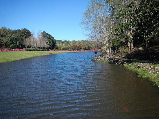 Theodore, Алабама: mirror lake