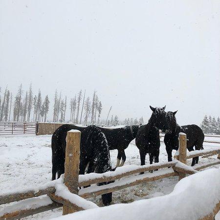 Dashing Thru The Snow: photo2.jpg
