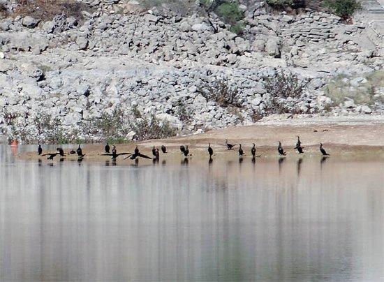 Albolote, Spanje: water bird