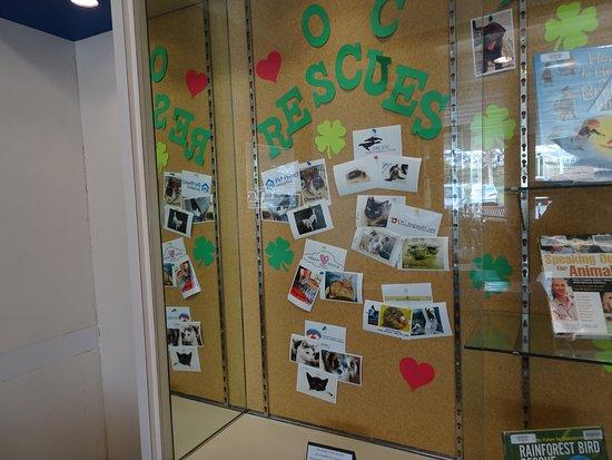 Dana Point, كاليفورنيا: Library supports community efforts and involvement