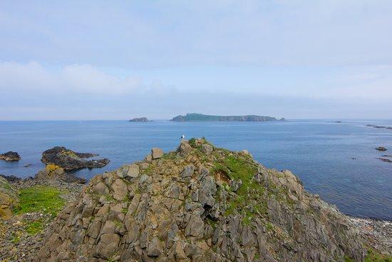 海驢島が見えました - 礼文島、...