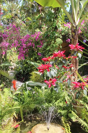 Barney\'s Flower and Hummingbird Garden,Negril - Picture of Barney\'s ...