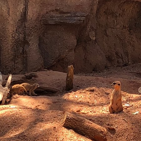 Brevard Zoo: photo1.jpg