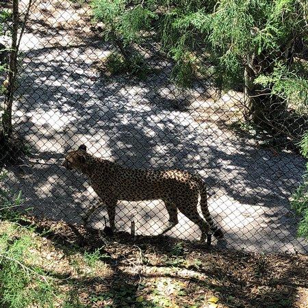 Brevard Zoo: photo4.jpg