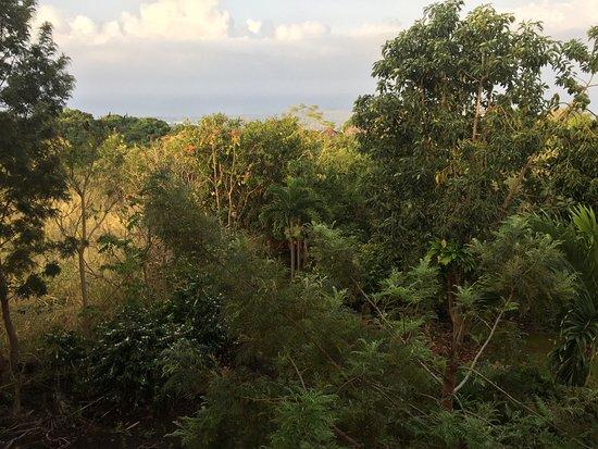 Holualoa, Hawái: From our lanai