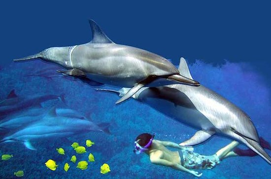 Kona Shore Excursion: Wild Dolphin ...