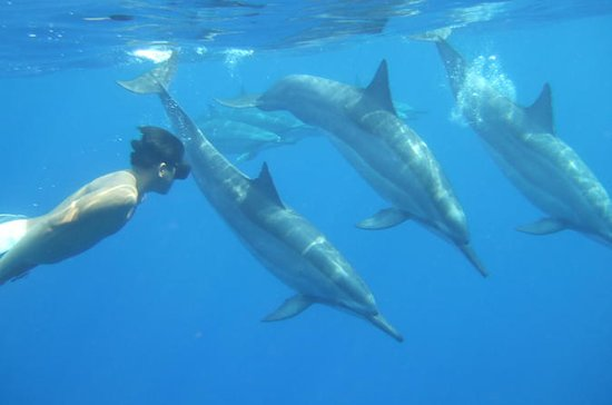 Wild Dolphins and Reef Snorkel Kealakekua Bay
