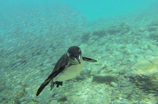 Full-Day Pinzon Island Snorkling, Fishing and La Fe Excursion...
