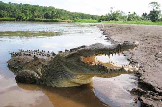 Jungle Crocodile Safari & Jaco Beach from San Jose