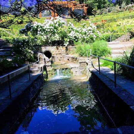 Berkeley Municipal Rose Garden: Colorido lugar !!