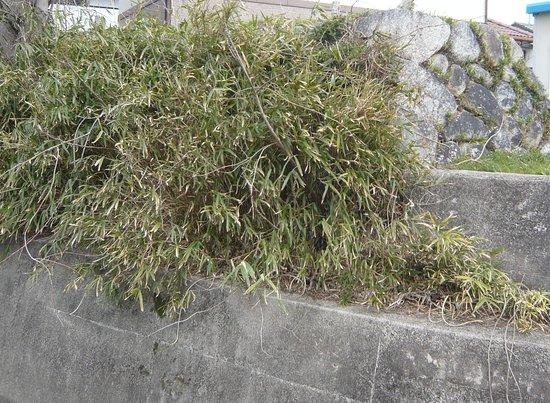 Komono Jinya