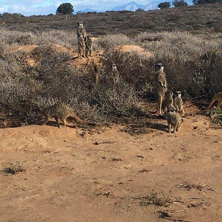 Meerkat Adventures: photo0.jpg