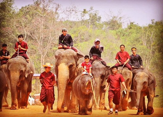ท่าตูม, ไทย: วันช้างไทย