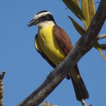 Isla Popa, Panama: photo2.jpg
