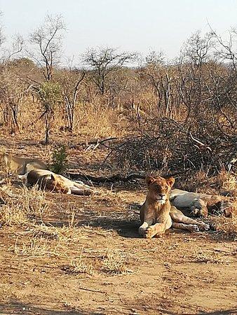 Manyeleti Game Reserve, South Africa: IMG_20170912_070855_large.jpg