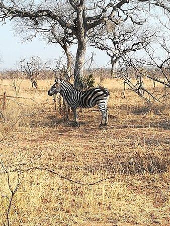 Manyeleti Game Reserve, South Africa: IMG_20170910_155553_large.jpg