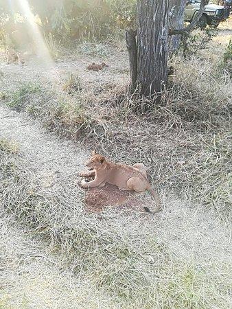 Manyeleti Game Reserve, South Africa: IMG_20170910_163241_large.jpg