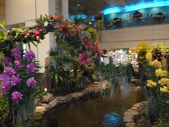 Pesci nella vasca picture of dfs singapore changi for Vasca pesci giardino