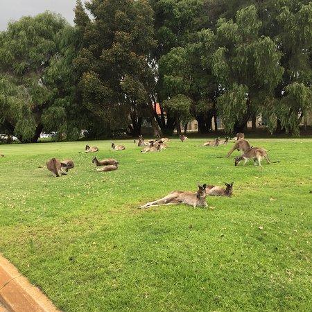 The Vines, Australien: photo4.jpg