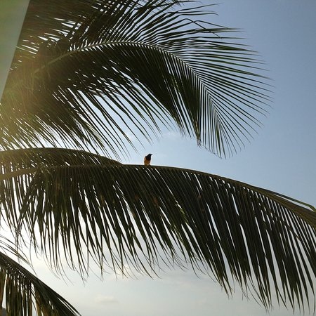 Bahia Apartments & Diving : photo4.jpg