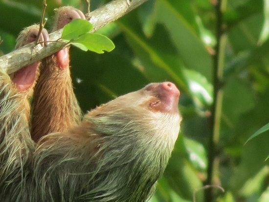 La Fortuna de San Carlos, Costa Rica: This is what we call: Pura Vida! Callidryas Tours / Sloth tour