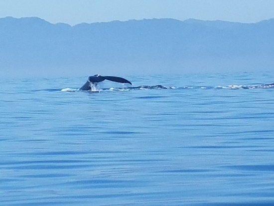La Vida Bella  Boat Tours: So many whales!