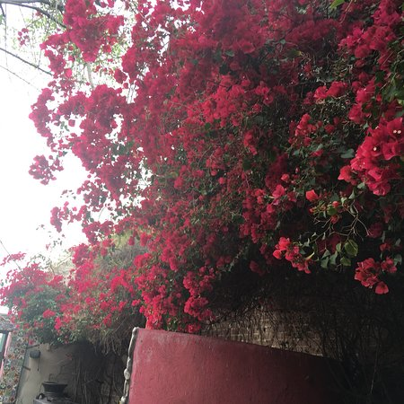 El Zocalo Mexican Grill: photo2.jpg