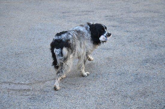Le chien de la maison... un amour de chien ! - Picture of Hotel du ...