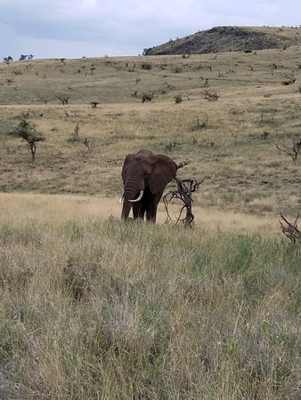 Lewa Wilderness: 20180314_090956_large.jpg