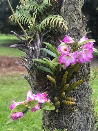 The Inn at Kulaniapia Falls: Orchids on grounds