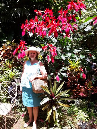 Hunte's Gardens: In front of a poinsettia!