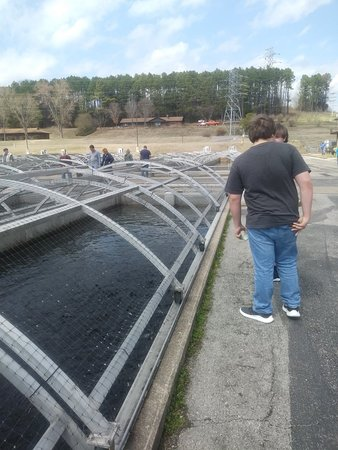 Shepherd of the hills fish hatchery branson mo arvostelut for Branson fish hatchery
