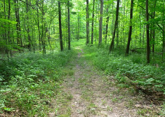 Newbury, OH: A trail at Punderson State Park