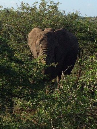 Hluhluwe, Sydafrika: Éléphant