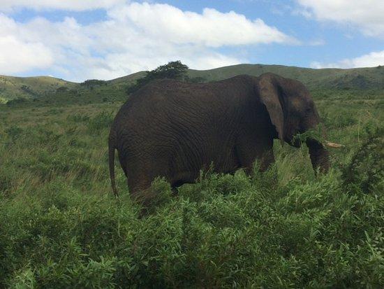 Hluhluwe, Zuid-Afrika: Éléphant