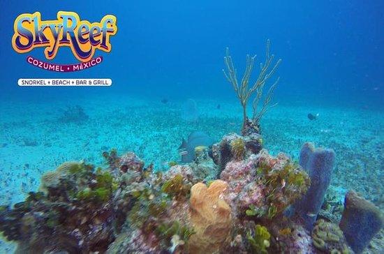 Increíble snorkeling y escapada a la...
