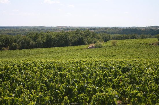 Gaillac wine tour from Toulouse half