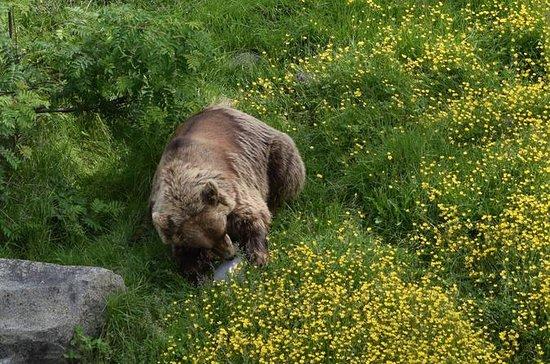 ラヌアアークティック野生動物公園への日帰り旅行