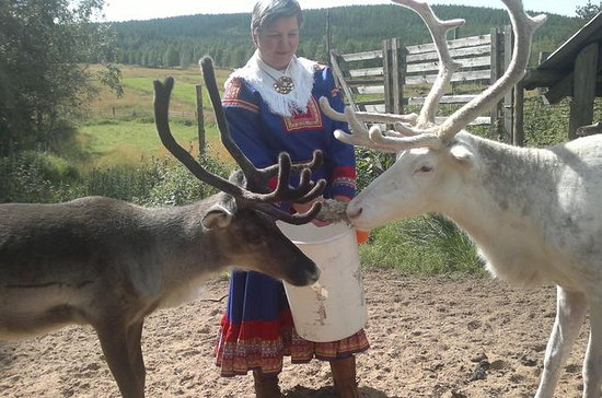Visit a Reindeer Farm and Wild Forests