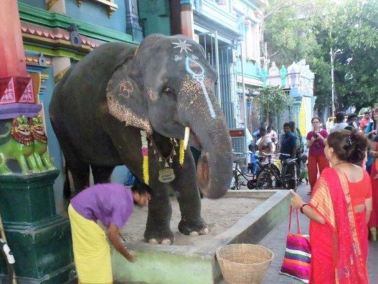 Arulmigu Manakula Vinayagar Temple: La bénédiction de l'éléphante Lakshmi .