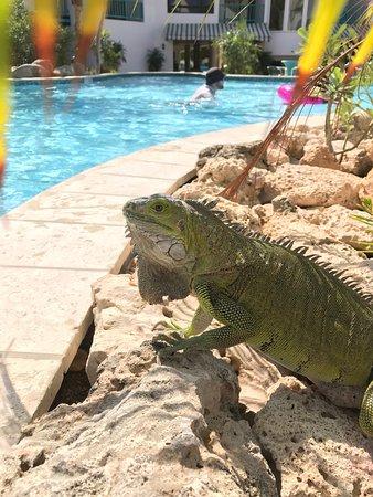 The Mill Resort & Suites Aruba Photo
