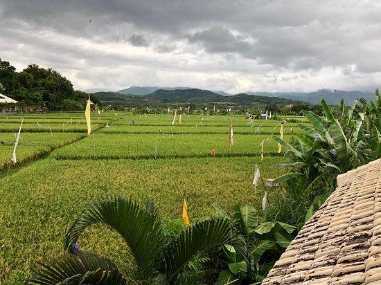 Seririt, อินโดนีเซีย: photo2.jpg