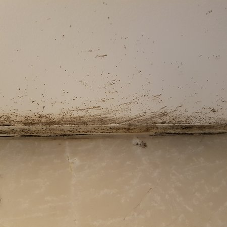 Hippo Boutique Hotel: Mould in the bathroom
