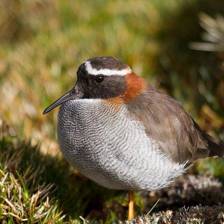 Albatross Birding And Nature Tours