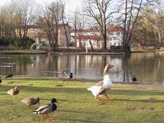 Bad Driburg, Deutschland: IMG_20180314_170722_large.jpg