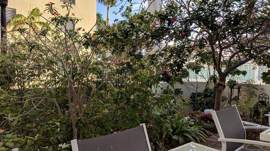 Villa Italia Hotel: Nice trees