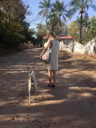Gunjur, Gambiya: Seven, Footsteps' dog, accompanies you to the beach - an easy 25 minute walk
